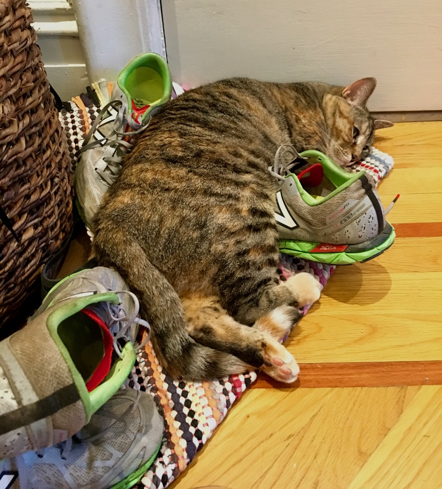 Cat curled up on running shoes